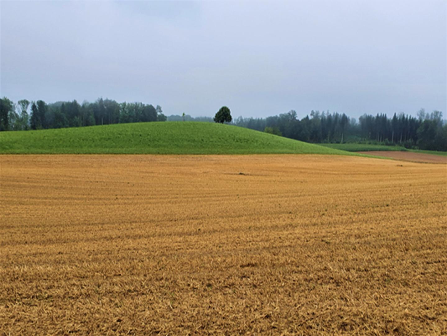 Foto vom Hügel mit Baum